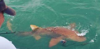 night shark fishing, shark fishing, fishing, night fishing, florida, sharks