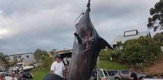 Fishing, fish, blue marlin, big catch