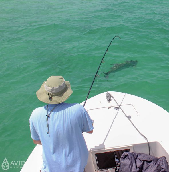 tarpon, fishing, fish, saltwater