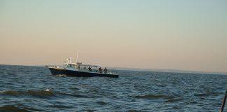 boat, fishing, fish, sheepshead, maryland fishing, big catch