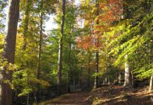 camping, fall foliage, campsites, fall camping