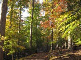 camping, fall foliage, campsites, fall camping