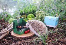 camping, camping hedgehog, hedgehog, azuki