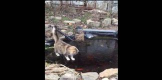 cat, cat fishing, fishing, fish, ice fishing